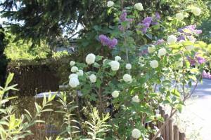 Blumensitzecke
